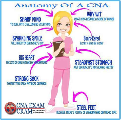 cna duties, skills and characteristics | cna exam cram, Human Body
